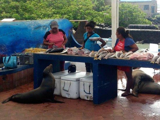 Hotel  La Casa de Judy: mercado del pez