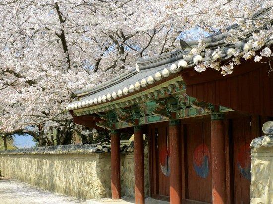 Daereungwon: Daerungwon with cherry blossoms