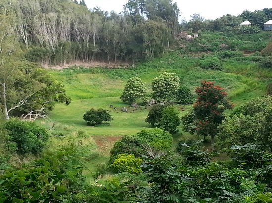 Hawaii Island Retreat at Ahu Pohaku Ho`omaluhia: The sacred gulch. And yes, it's really this green.