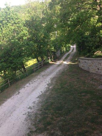 Agriturismo Foglie : Strada di arrivo
