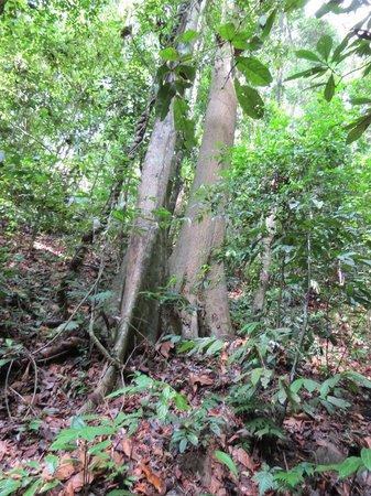 Belum Rainforest Resort: promenade dans la jungle