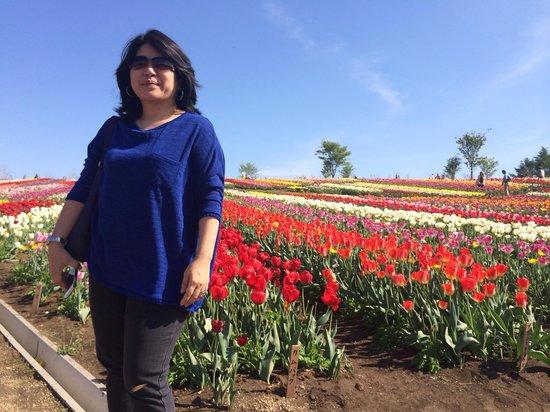 Nasu Flower World: tulipa
