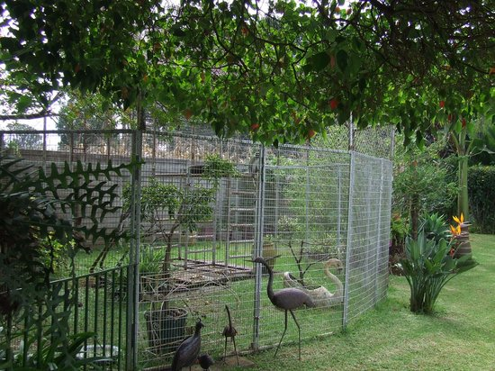 Guinea Fowls Rest B&B : view of garden