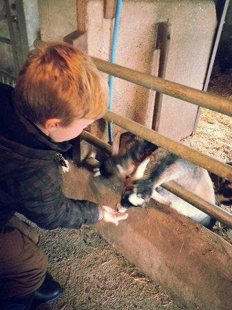 Cobble Hey Farm & Gardens: My son feeding the goats :-)
