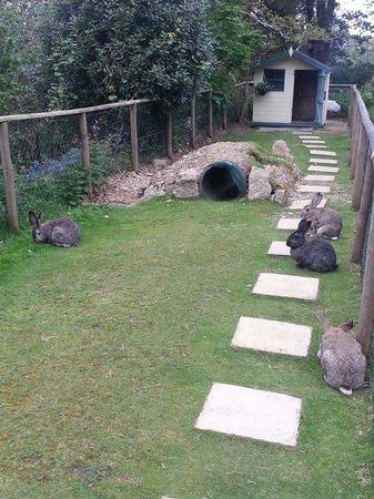 Trenython Manor: Giant rabbits