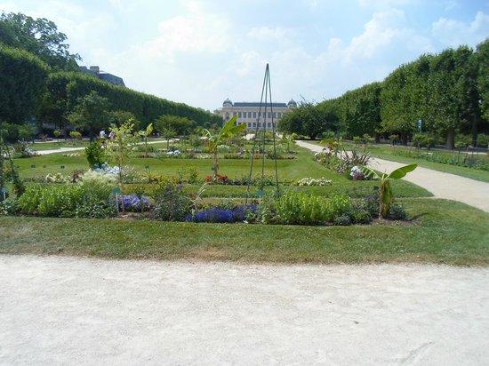 Jardin des Plantes : Большая аллея