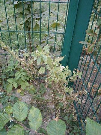 Jardin des Plantes : Рассматривая потрясающие растения, обожглась о банальную крапиву, приютившуюся  в углу.