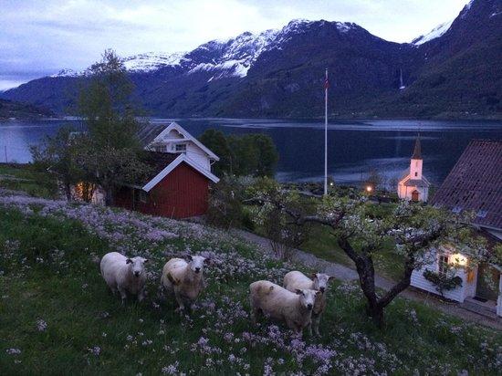 Nes Gard : Sheep.