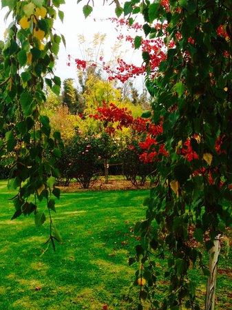Balingup Jalbrook Cottages: Jalbrook Cottage autumn garden