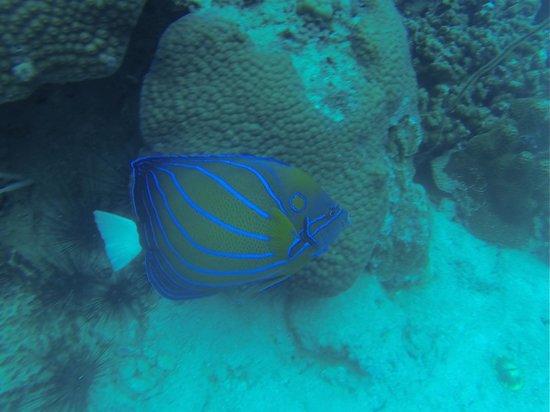 Ihasia Diving Koh Tao : Ángel, el pez.