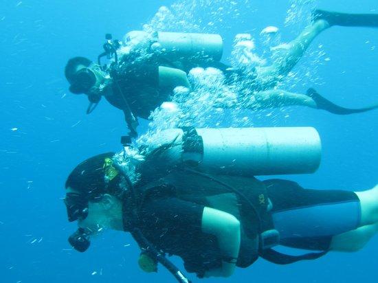 Ihasia Diving Koh Tao : Bajo las burbujas