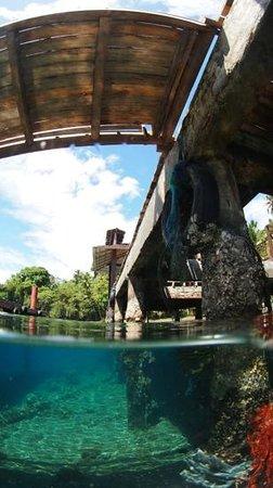 Kungkungan Bay Resort: House reef around the pier...