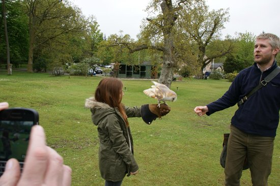 Strathblane Falconry: Dylan the Barn Owl