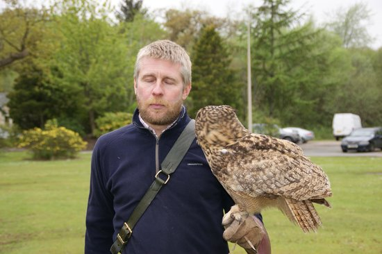 Strathblane Falconry: Greame and Corrie (European Eagle Owl)