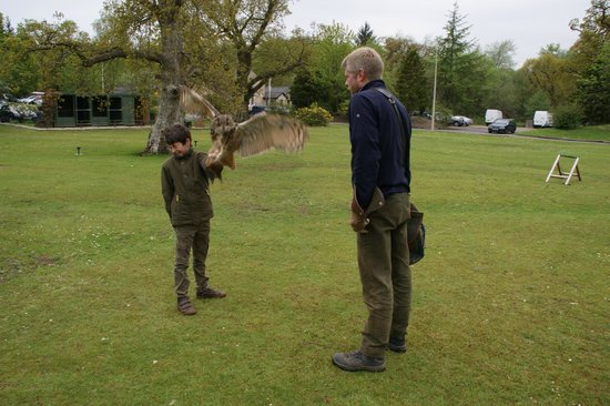 Strathblane Falconry: Greame flying Corrie the European Eagle Owl