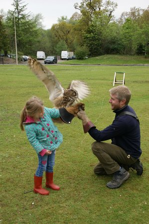Strathblane Falconry: Greame making sure a young fearless 5 year old can hold Corrie