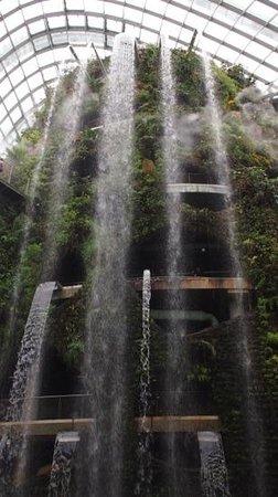 Jardines Botánicos de Singapur: Rainforest