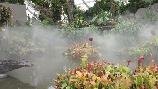 Jardines Botánicos de Singapur: Atmospheric