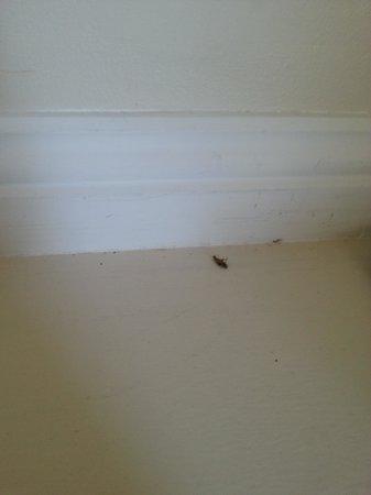 Ocean Breeze Motel : bugs
