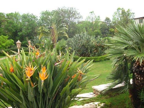B&B Al Giardino : Le jardin