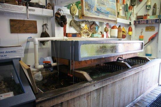 Roy Moore Lobster Co: Le vivier