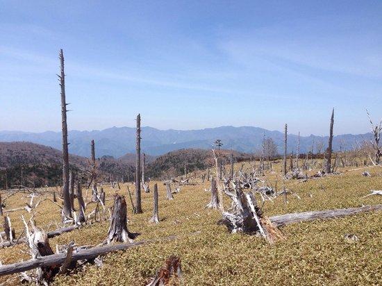 Mount Odaigahara: 正木ケ原〜昔は豊かな森だった〜