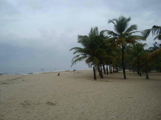 Marari Beach: full coconut cover