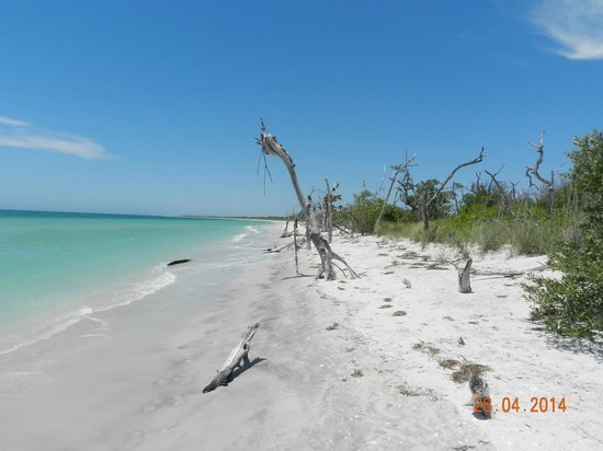 Sanibel Island Cruise Line : cayo costa