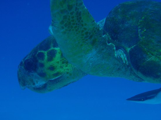 Gypsea Divers: Every day, every turtle...:)