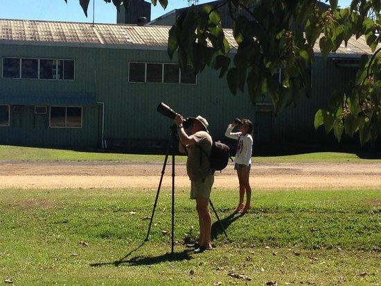 Nerada Tea Plantation : Tree Kangaroo Spotting