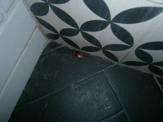 H10 Conquistador : kakkerlakken in damestoilet !