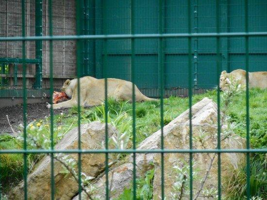 Dublin Zoo: Zoo