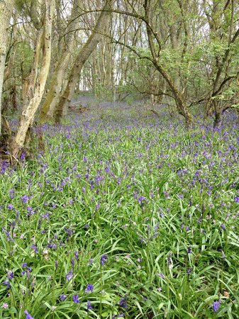 Blairgowrie Holiday Park: Local walk at Bluebell wood