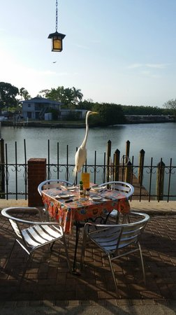 Little Bar Restaurant : An egret landed in a table just in front of our table and was nicely taken away by a waitress