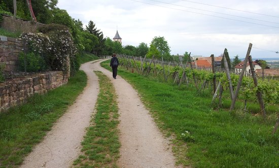 Clos Froehn : The vineyards around the village