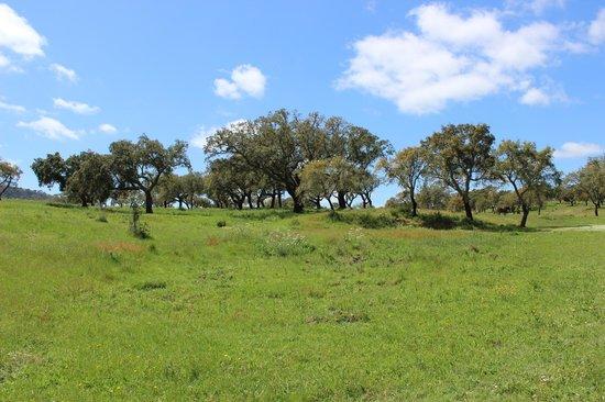 Herdade das Barradas da Serra: View 1