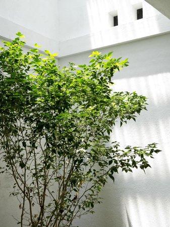 Palm Nest: Tree in a closed attrium