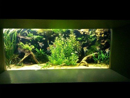 Zoo Basel : im Aquarium