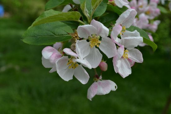 The Old Mill Soar: Spring blossom in the Old Mill garden