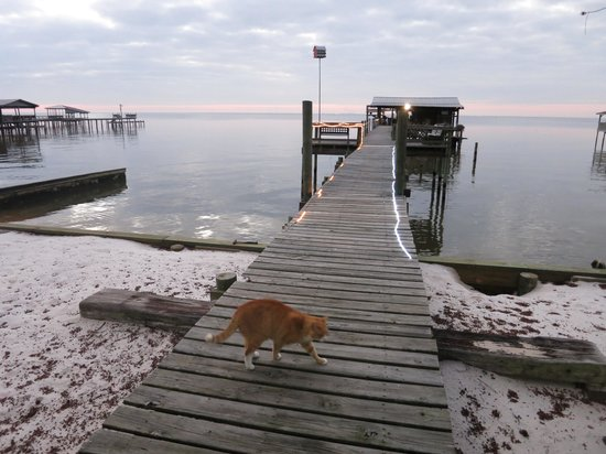 Bay Breeze Bed & Breakfast: Friendly ginger cat lives on the pier