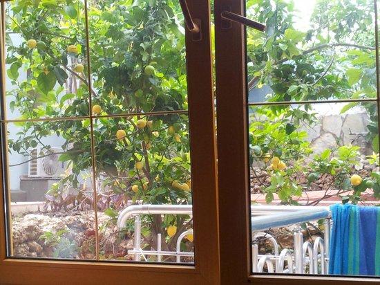 Dorian Hotel: The lemon tree
