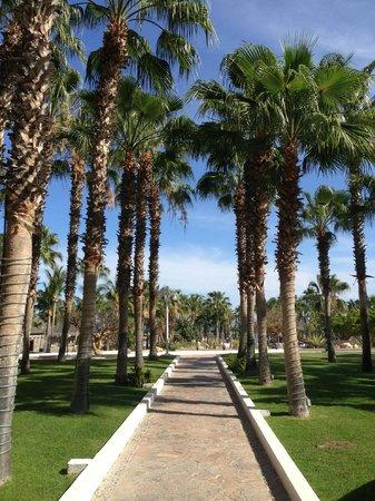 Paradisus Los Cabos : Aisle of palms!
