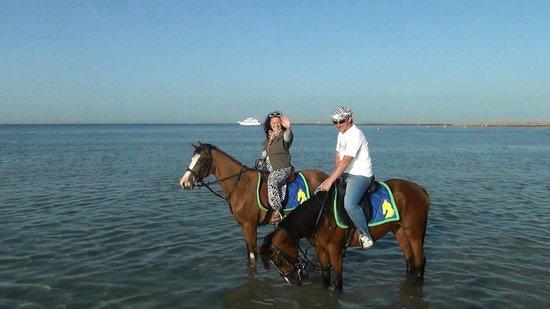 Sunrise Select Garden Beach Resort & Spa: Прогулка на лошадях (на море)