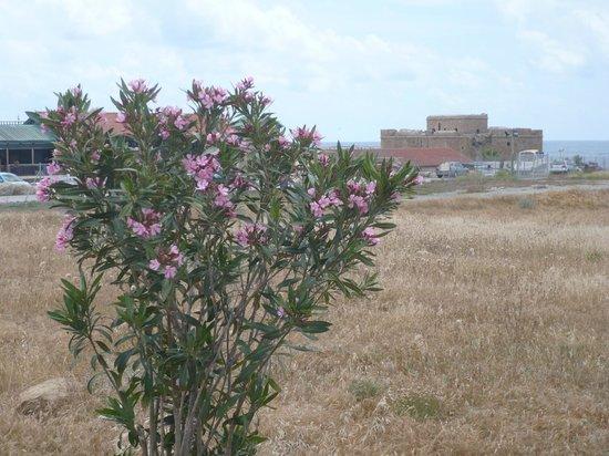 Kato Paphos Archaeological Park: 16