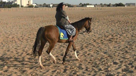 Sunrise Select Garden Beach Resort & Spa: Прогулка на лошадях (назад в пустыню)