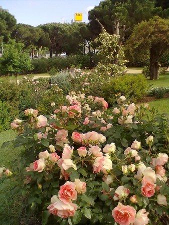 Roserar de cervantes picture of jardin de rosas de for Barcelona jardin