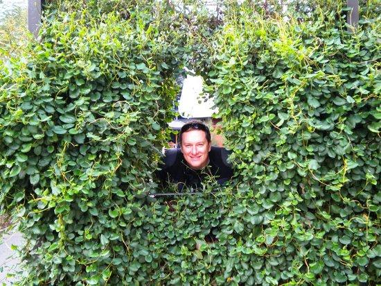 Adelaide Botanic Garden: messing around