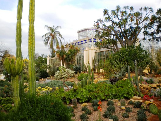 Adelaide Botanic Garden: cactus house