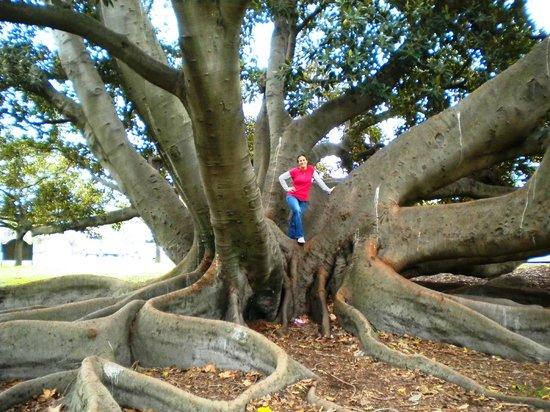 Adelaide Botanic Garden: tree climbing
