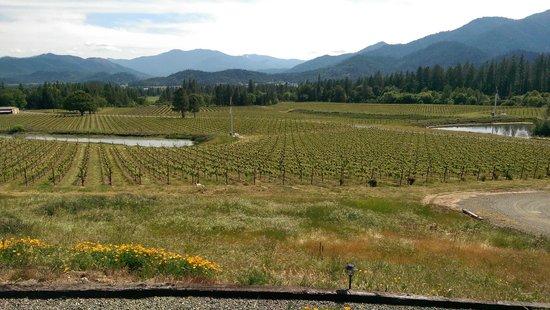 Wine Hopper Tours: Serra Vineyards